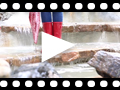 Video from Bottes de pluie femme mini glow